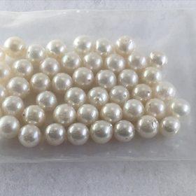 パールの珠